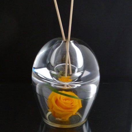 orion rose jaune