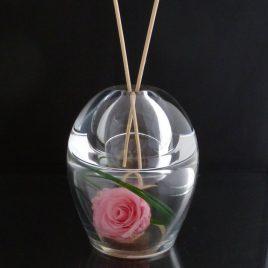 orion rose rose