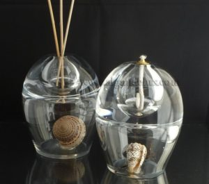 coquillages de collection