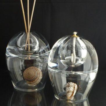 Sublimer les coquillages de collection